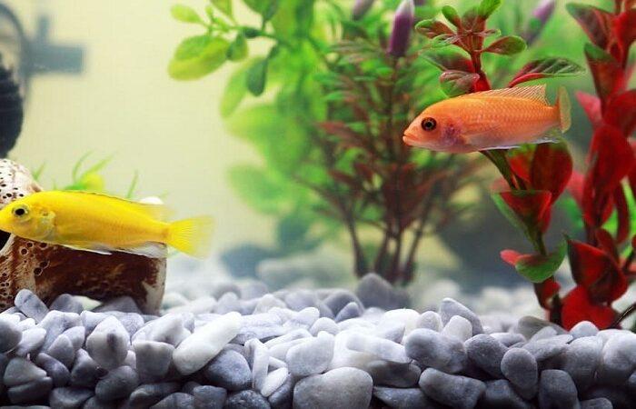 best-size-fish-tank-min